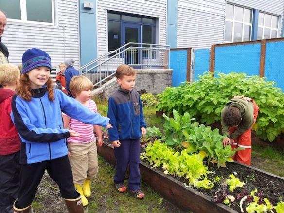June 2014: Alaska Elementary School Garden, Thanks Alaska Farm to School!