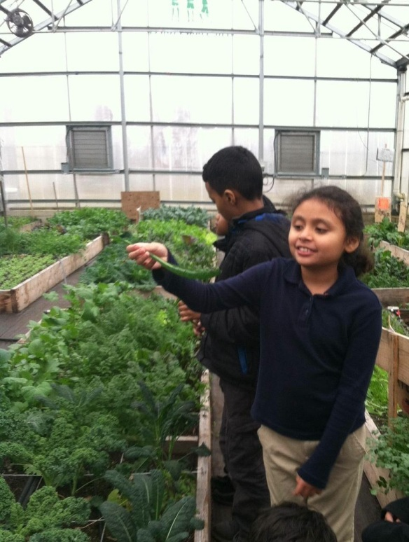 FoodCorps Massachusetts at the Food Project