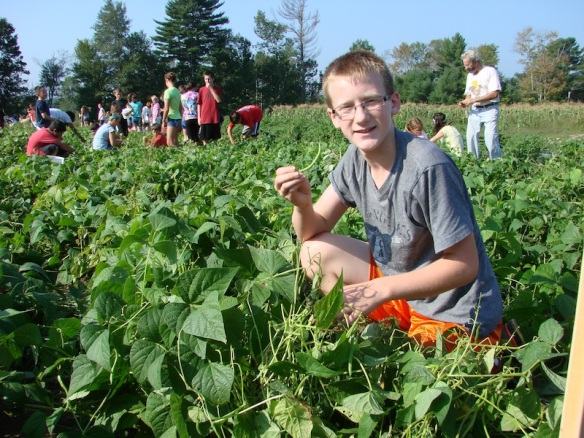 Maine student pick produce in local fields