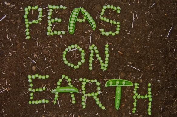 Peas on Earth1