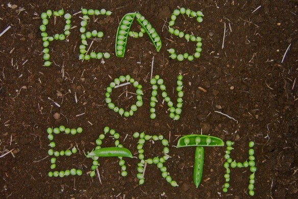 Peas on Earth1