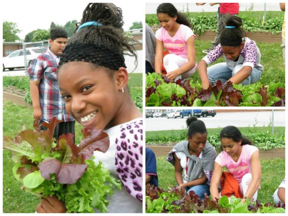 Colonial School District, New Castle, Delaware, gets middle students excited about planting and growing vegetables.